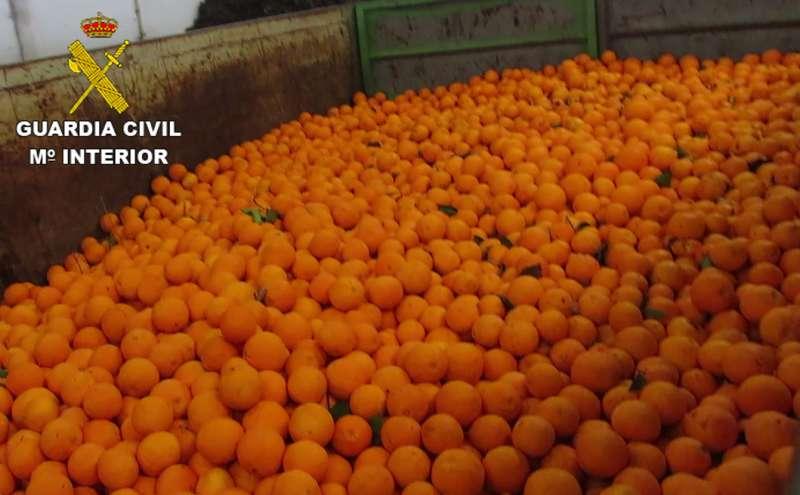 Las naranjas incautadas. //EPDA