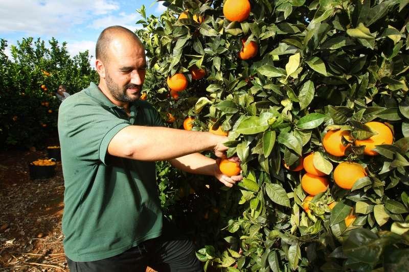 Naranjas Tono