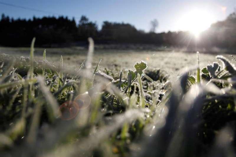 Un campo cubierto por un manto de hielo al amanecer. EFE