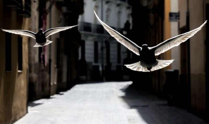 El silencio en las ciudades debido al confinamiento ha ocasionado que volvamos a escuchar los trinos de las aves. EFE/Ana Escobar