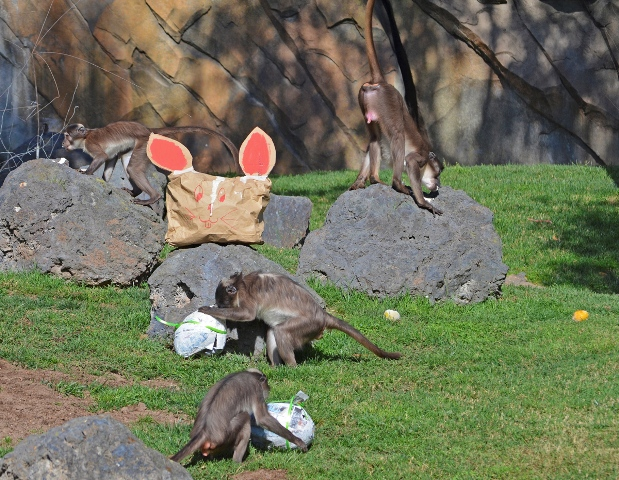 Enriquecimiento especial de Pascua. FOTO: EPDA
