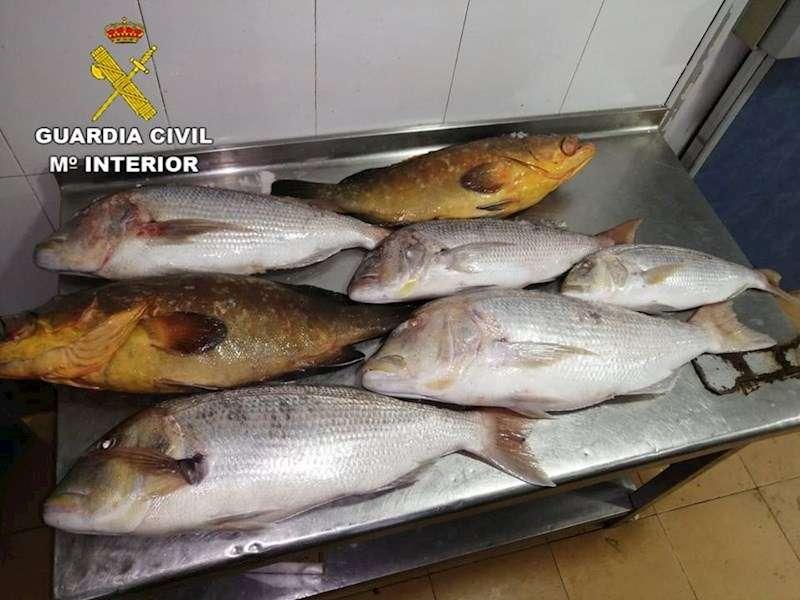 Imagen de los pescados incautados, facilitada por la Guardia Civil. EFE