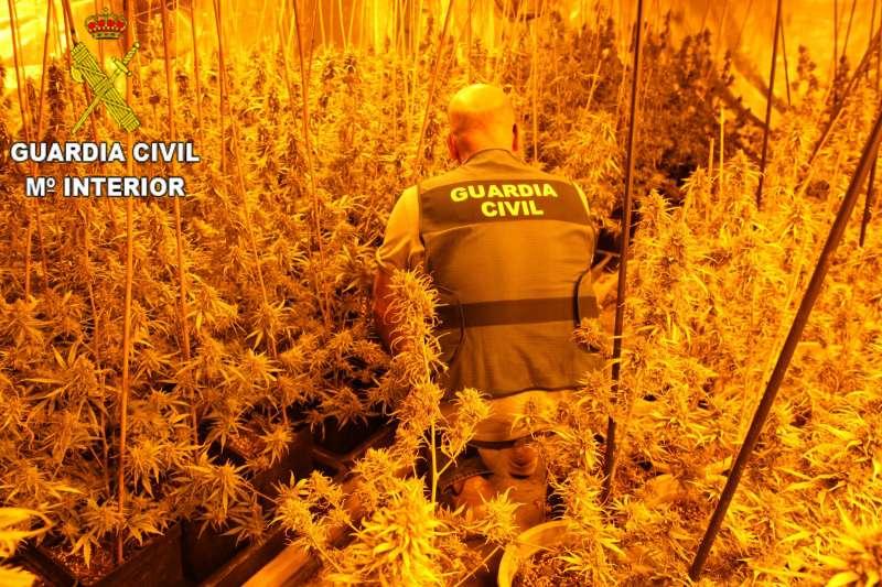 Agente de la Guardia Civil requisando la plantación ilegal