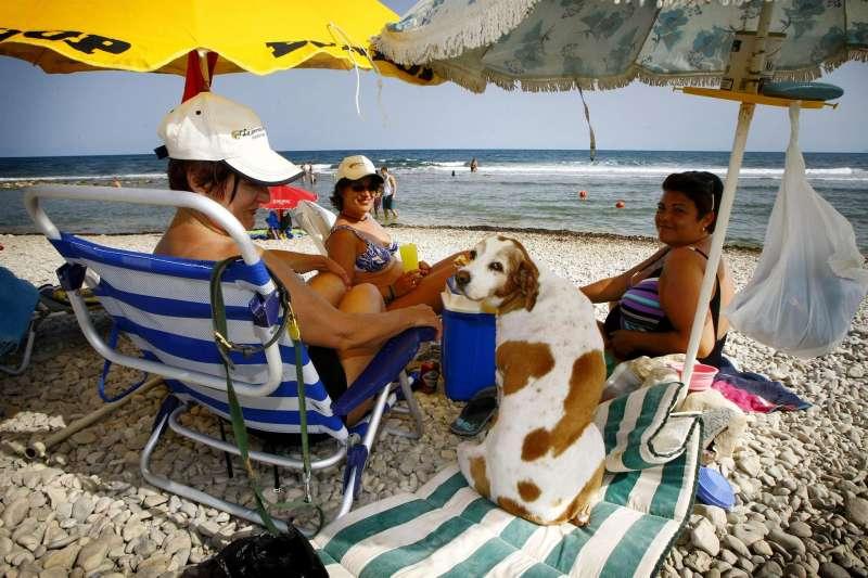 Varias mujeres con un perro bajo las sombrillas en una zona de playa habilitada para mascotas en el municipio alicantino de El Campello.