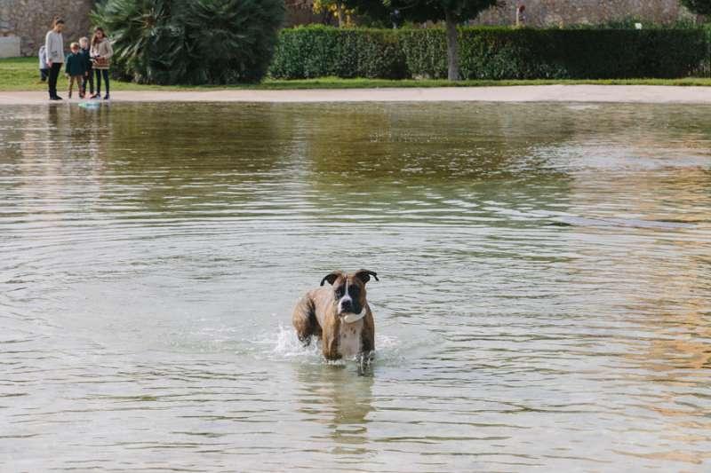 Un perro con un geolocalizador de Gosi