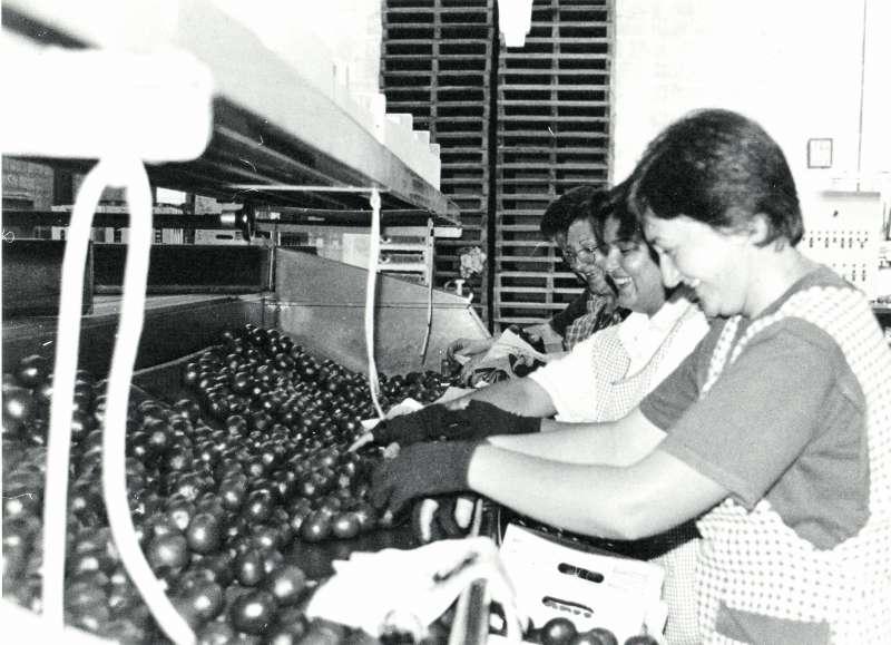 Treballadores d?un magatzem de taronges del municipi de Sagunt. EPDA