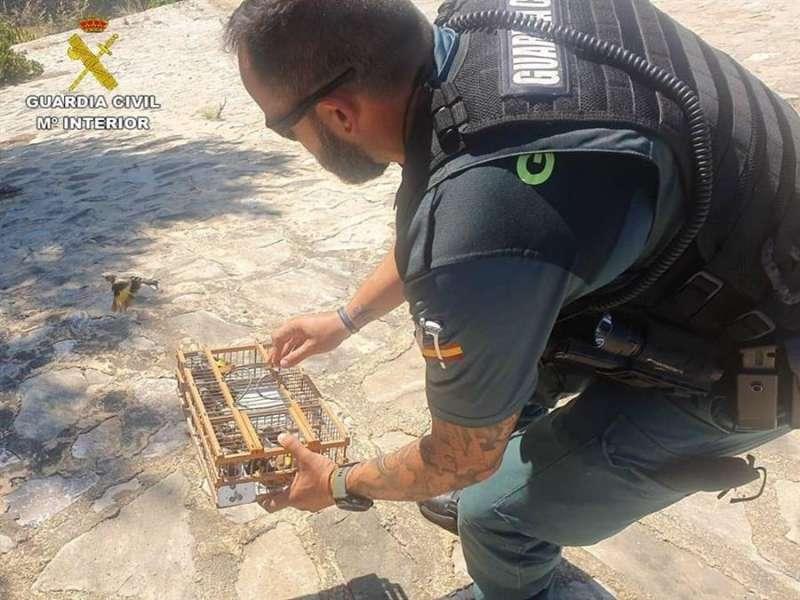 Un agente, liberando a los jilgueros, en una imagen difundida por la Guardia Civil. EFE