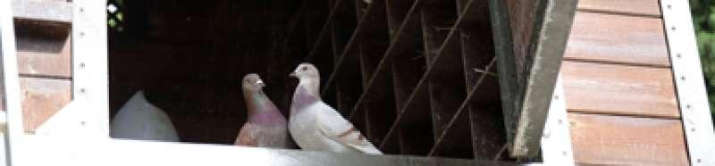 Aves en València. EPDA