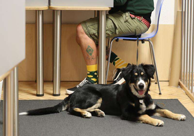 Un hombre junto a su perro, en una imagen de archivo. EFE/Archivo