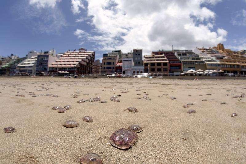Medusas en una playa. EFE/Archivo