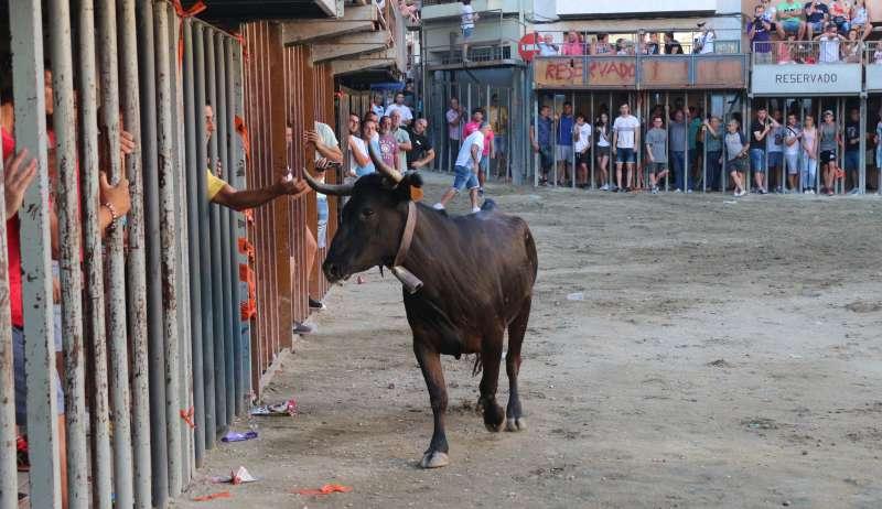 Los toros tampoco entran este año en el calendario festivo de Geldo
