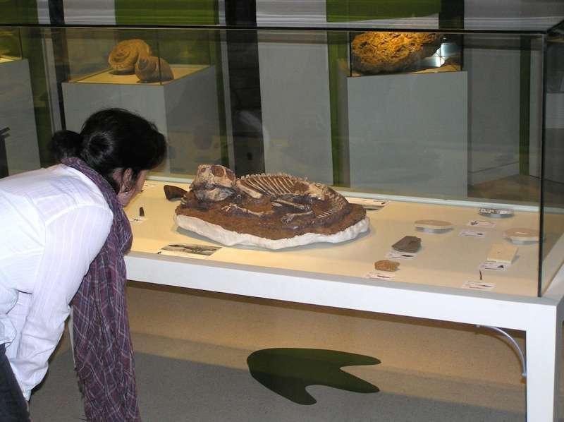 El ejemplar original de ?Psittacosaurus?, un dinosaurio de pequeño tamaño procedente de Mongolia