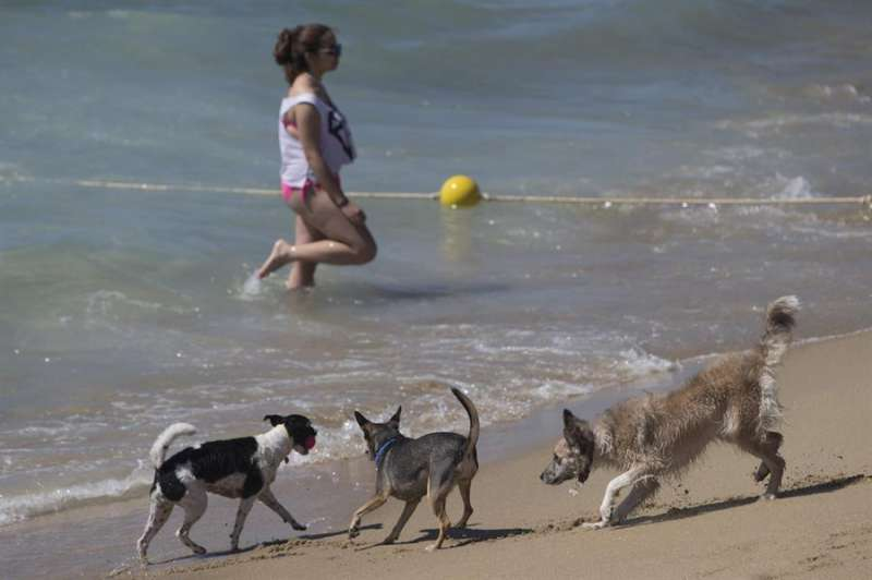 Unos perros juegan en la orilla de una playa. EFE/Archivo