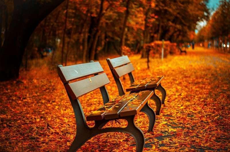 Imagen de otoño con las hojas caídas de los árboles. EPDA