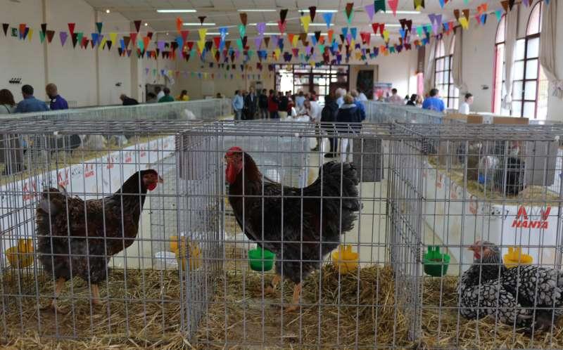 El salón multiusos se llenó de especies avícolas