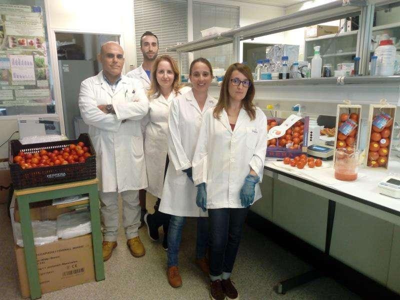 Investigadores de la Universitat Politècnica de València que investigan sobre este tipo de tomate, en una imagen de la UPV.
