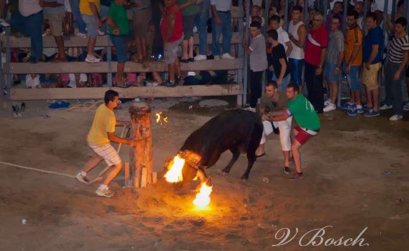 Corte de la cuerda del toro embolado en Castellnovo