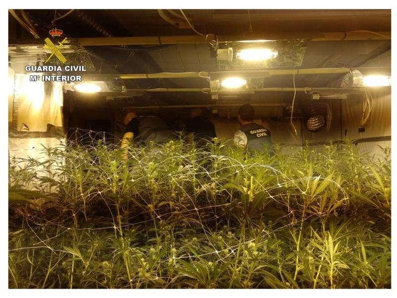 Plantación de marihuana localizada en una piscina de Calpe. GUARDIA CIVIL
