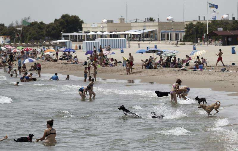 Imagen de la playa para perros en Pinedo (València). EFE/Archivo