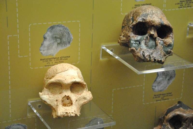 Museu de Prehist�ria. EPDA