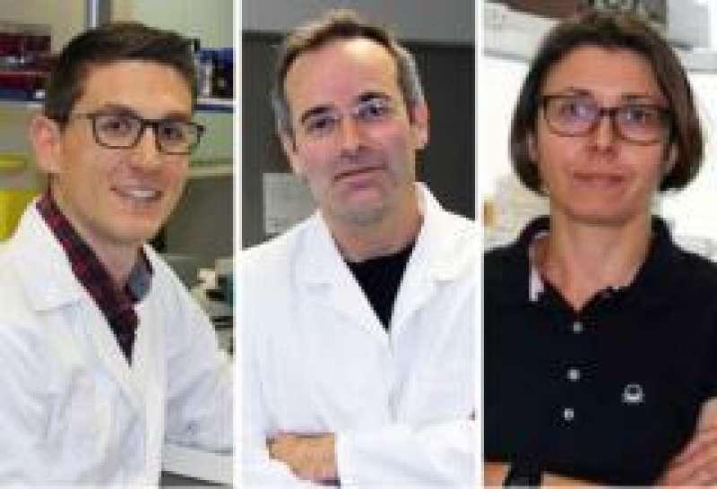Grupo investigadores del proyecto internacional./PDA