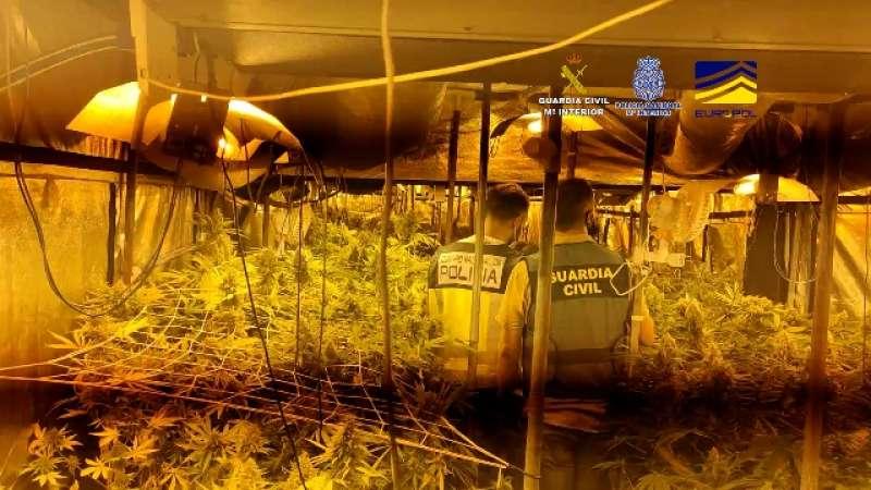 Imagen de las plantas de marihuana encontradas./ Guardia Civil