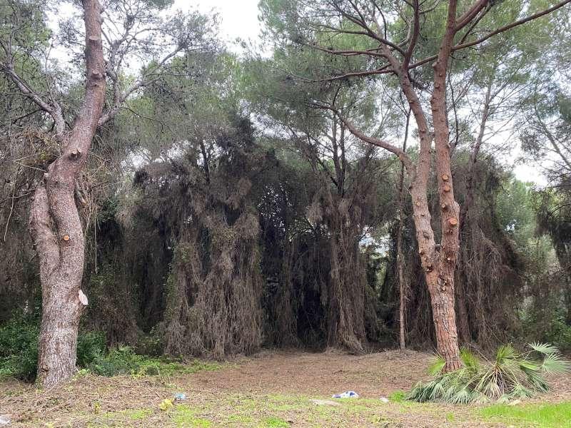 Polvorín en pleno Parque Natural de la Albufera. EPDA