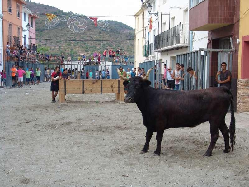 De momento los toros no están en la programación
