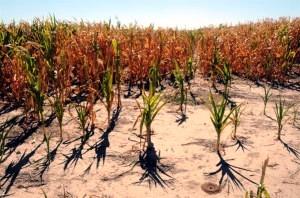 Sembrados secos en Argentina por el fenómeno climático de