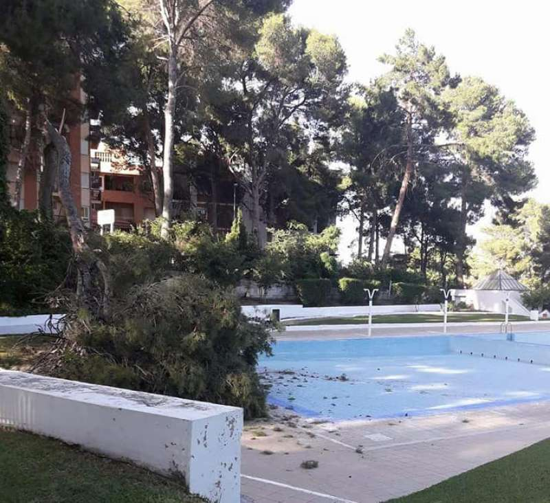La copa del pino cayó sobre el perímetro de la piscina