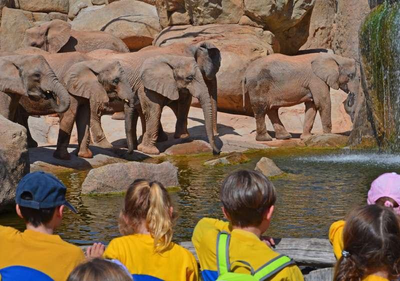 Grupo escolar cara a cara con los elefantes en BIOPARC Valencia. epda