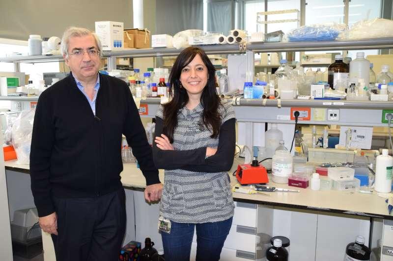 Investigadores del CIPF identifican mecanismos por los que la neuroinflamación induce alteraciones motoras. EPDA