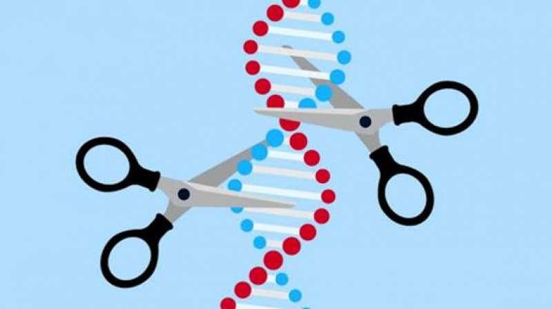La ?tijeras? moleculares CRISPR han revolucionado la edición genética. / Pixabay