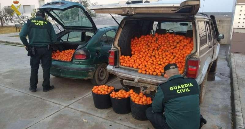 Naranjas incautadas