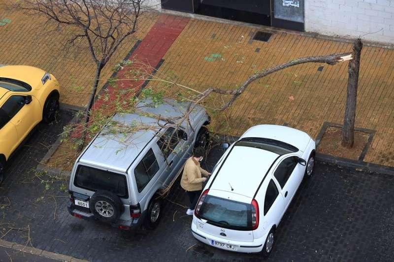 La Comunitat Valenciana se encuentra en alerta por fuertes rachas de viento cercanos a los 100km/h. En la imagen un vecino retira su vehículo trás la rotura de un árbol en la zona del Raval Universitari, en Castellón. EFE/Domenech Castelló.