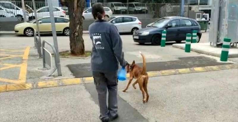 Una voluntaria pasea a un perro por Paterna. EPDA