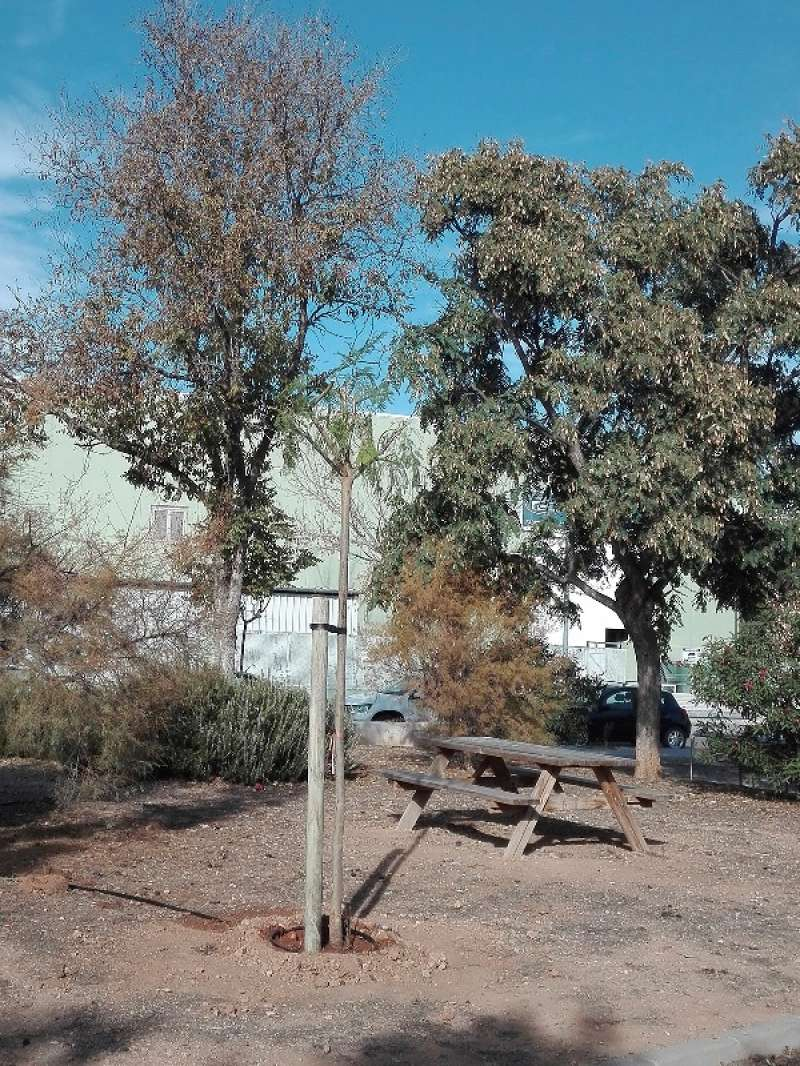 Arbres en el parc del polígon de Godella. EPDA