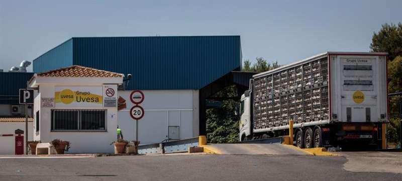 Un camión con gallinas a la entrada principal de la empresa cárnica Grupo Uvesa de Rafelbunyol. EFE/Biel Aliño/Archivo