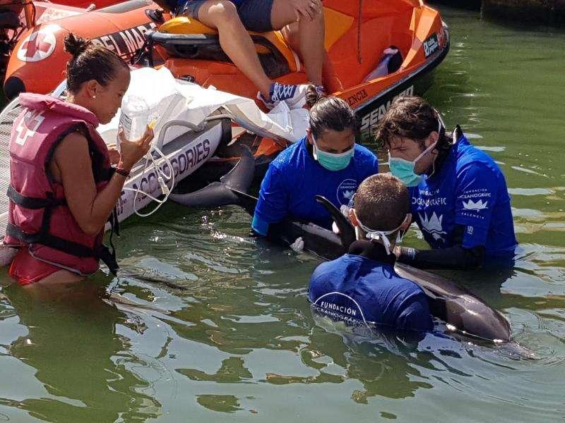 Expertos atienden al delfín en el agua, en una imagen de la Fundación Oceanogràfic