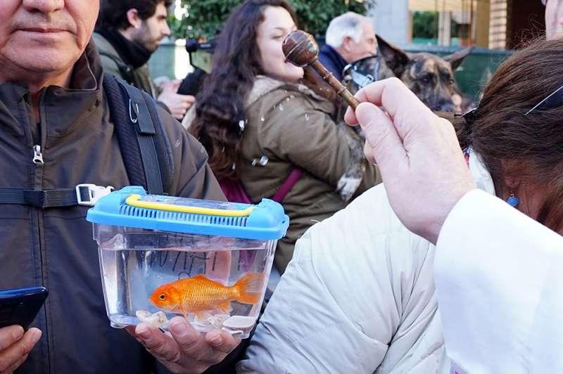 Un vecino acude con su pez