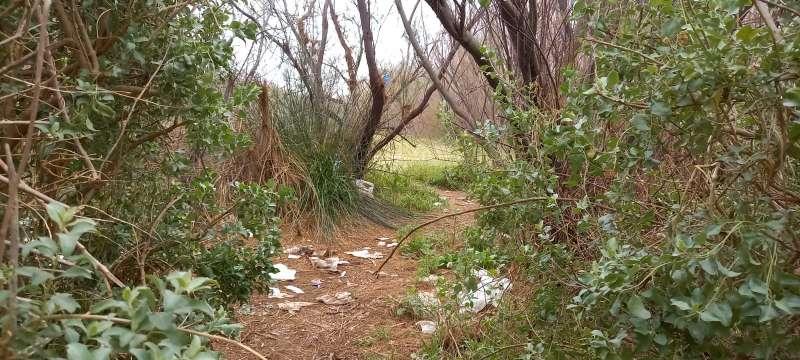 Zona boscosa en el Saler. EPDA