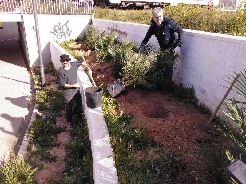 Xirivella planta arbres