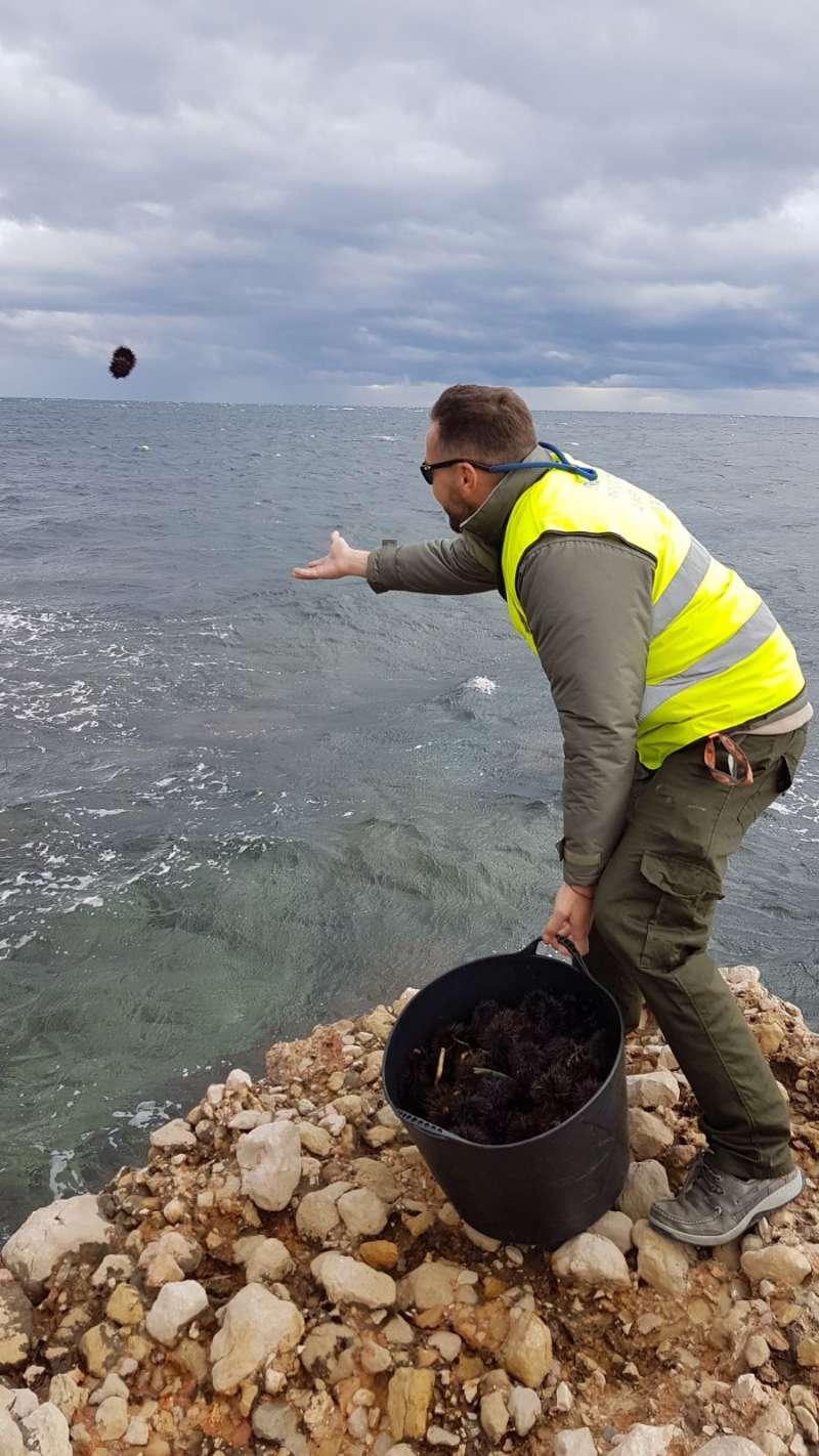 Devolución de los erizos al mar.
