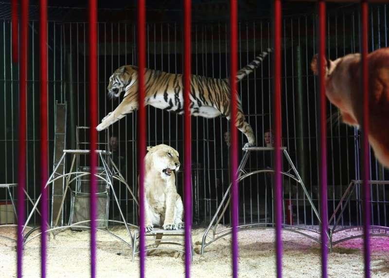 Imagen de archivo de un circo con animales. EFE