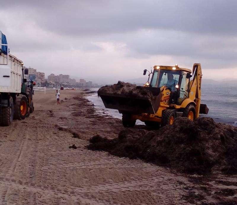 Máquinas retirando algas de las playas de Alicante, en una imagen difundida por el Ayuntamiento. EFE