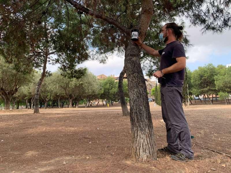 Colocación de trampas para controlar la población del mosquito tigre en la avenida Europa de Paterna. EPDA
