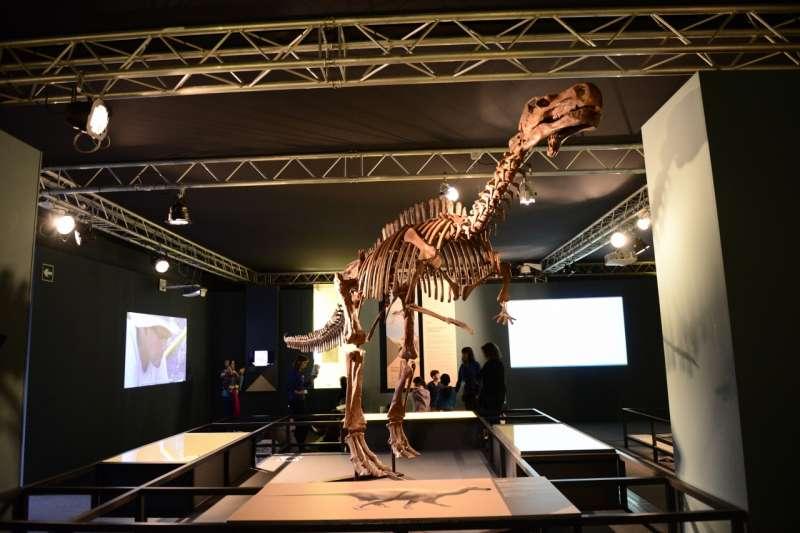 El Museu de les Ciències acoge la jornada de paleontología de la Comunitat.
