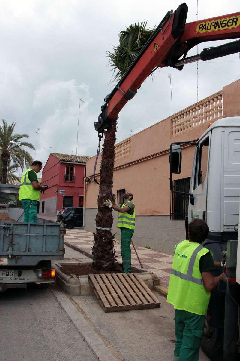 Reposición de palmeras en Picassent