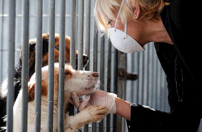 Una mujer protegida con guantes y mascarilla acaricia uno de los perros que se encuentran acogidos en las instalaciones de la perrera Ribamontes. EFE
