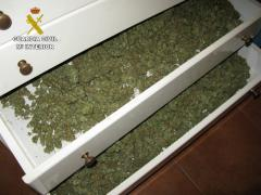 Imagen de parte de la marihuana incautada